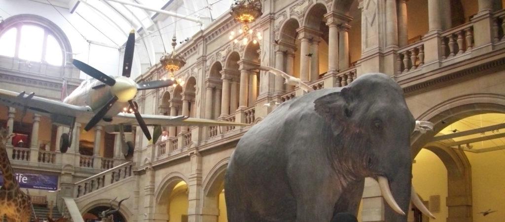 elefant kelvingrave musem